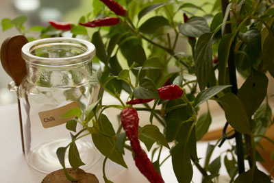Chili plant with empty jar labelled chili